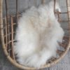 Vacht ijslandschaap wit